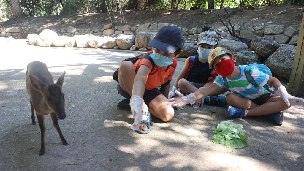 niños campamento