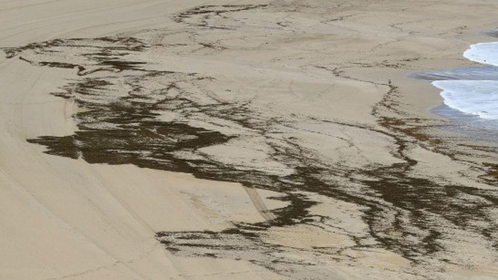 Una de las algas más dañinas del Mediterráneo, cada vez más numerosa en el Cabo de Creus