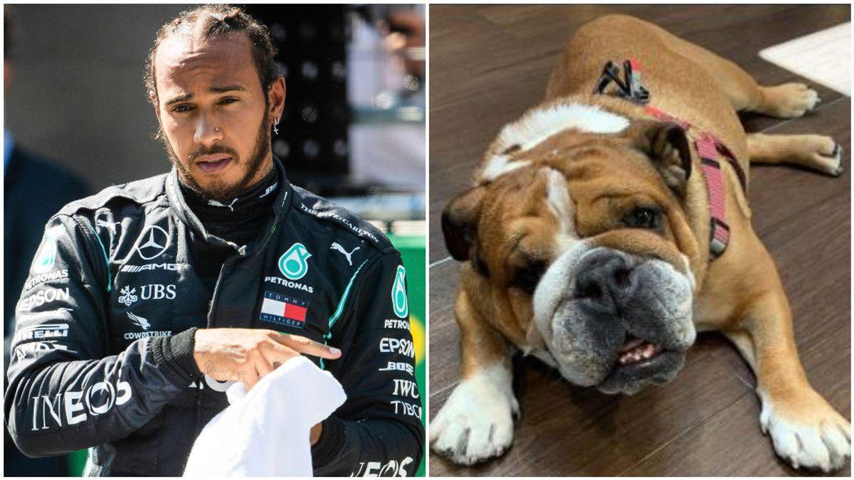 Lewis Hamilton y su perro Roscoe en Instagram.