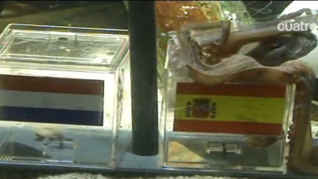 El pulpo Paul predice que España ganará a Holanda