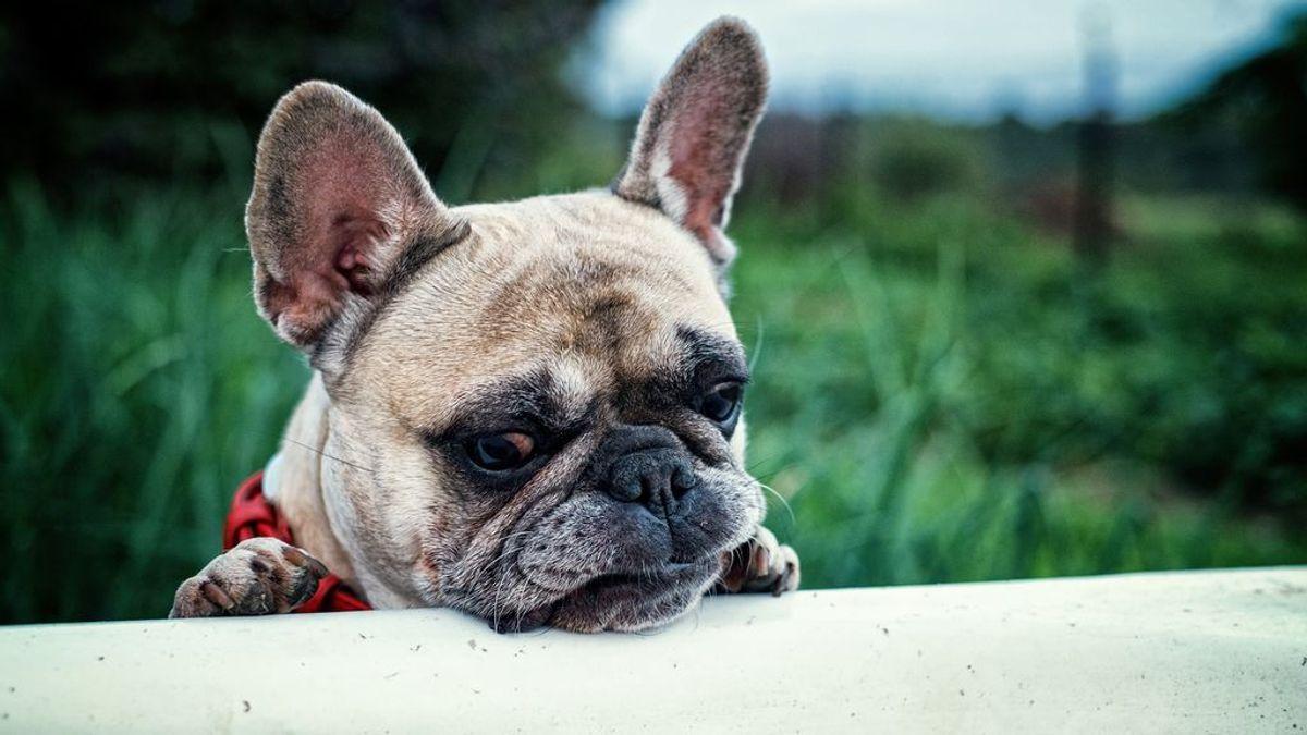Ni tienen privacidad ni la conocen, pero es posible enseñar a un perro a esperar fuera del baño