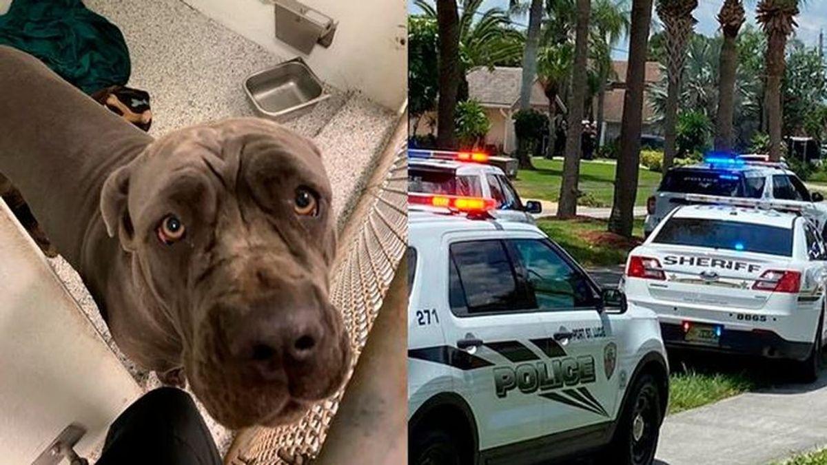 Tirotea a sus vecinos, una pareja y sus dos hijas menores: habían denunciado a su perro por agresivo