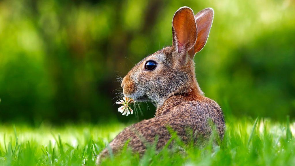 Se acabaron los excrementos por toda la casa: enseñar a tu conejo a hacer sus necesidades en un sitio es sencillo
