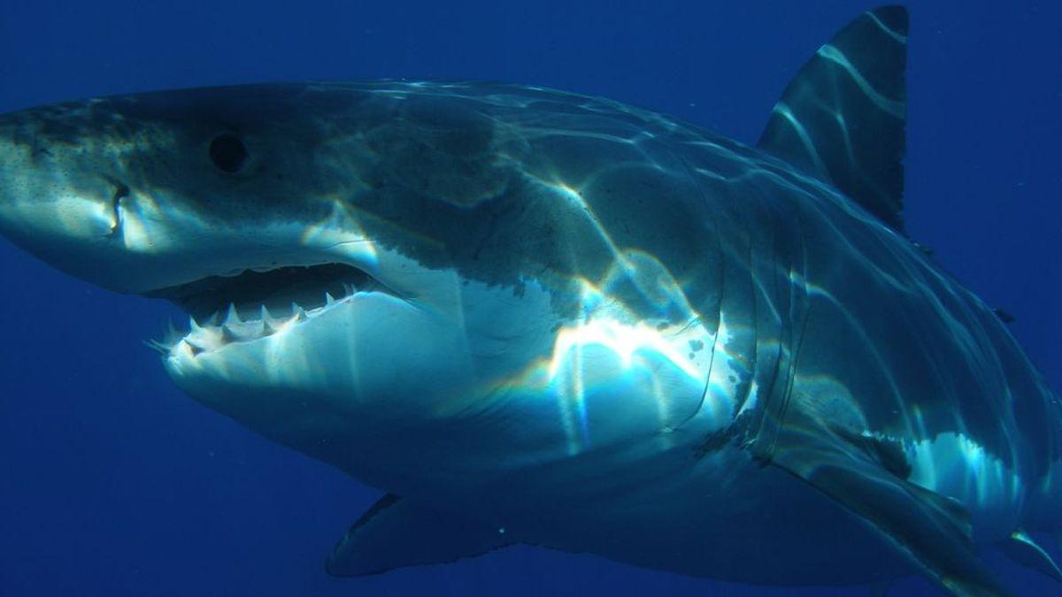Un menor de 15 años muere mientras surfeaba con sus familiares tras el ataque de un tiburón blanco