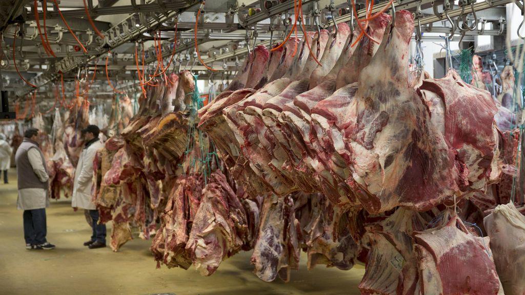 Comer carne roja es mejor para nuestros músculos que una dieta vegetariana, según científicos británicos
