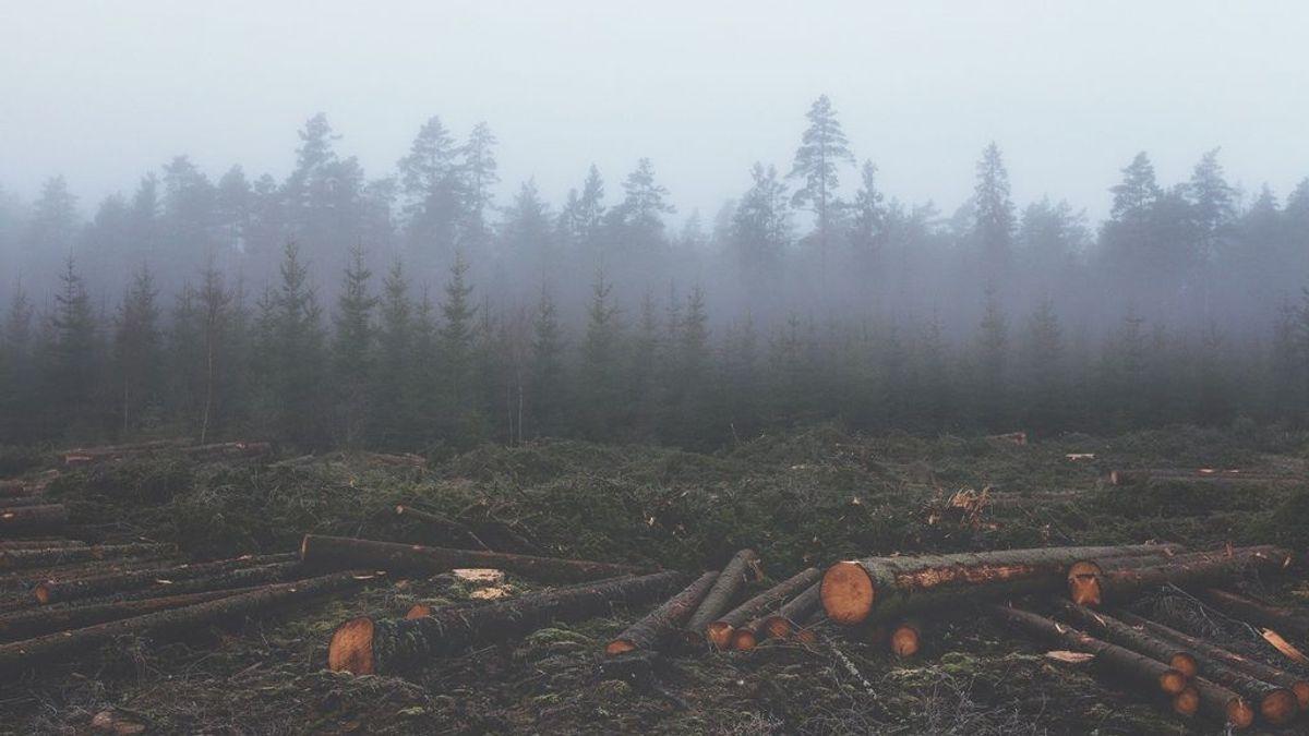 Dónde se encuentran las zonas más deforestadas del planeta: estadísticas